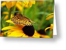 Yellow And Browns Greeting Card
