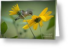 Yellow And Green Greeting Card