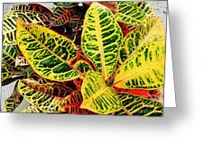 Yellow And Green Croton Greeting Card