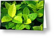 Yellow And Green Leaves Greeting Card