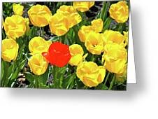 Yellow And One Red Tulip Greeting Card