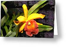 Yellow And Orange Cattleya In The Hothouse Greeting Card