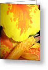 Yellow And Orange Petals Illuminated Greeting Card