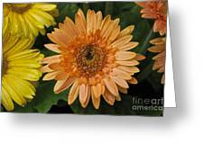 Yellow And Peach Daisy Greeting Card