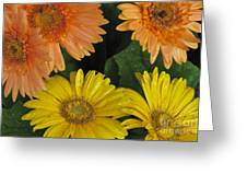 Yellow And Peach Greeting Card