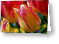 Yellow And Pink Tulips Greeting Card