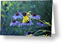 Yellow  And Purple Coneflowers Greeting Card
