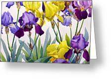 Yellow And Purple Irises Greeting Card