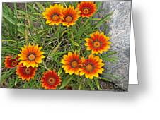 Yellow And Red Daisy Flower Greeting Card