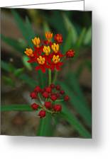 Yellow And Red Flowers Greeting Card