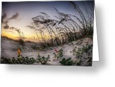 Yellow And Red Flowers On The Beach Greeting Card