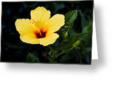 Yellow And Red Hibiscus Greeting Card