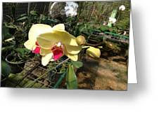 Yellow And Red Orchid Greeting Card