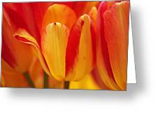 Yellow And Red Striped Tulips Greeting Card