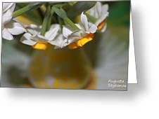 Yellow And White Greeting Card