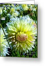 Yellow And White Dahlia Flowers Greeting Card
