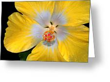 Yellow And White Hibiscus Greeting Card