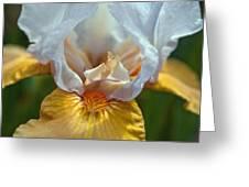 Yellow And White Iris Greeting Card