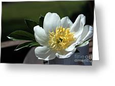 Yellow And White Peony Flower Greeting Card