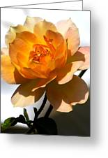Yellow And White Rose Greeting Card