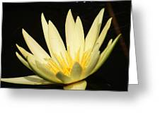 Yellow And Yellow Waterlily...   # Greeting Card