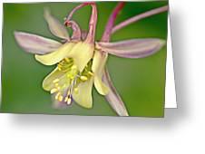 Yellow Aquilegia Bloom Greeting Card