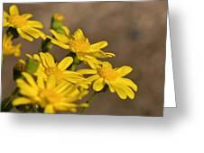 Yellow Arfaj Flowers Greeting Card