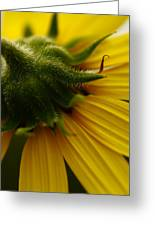 Yellow Backside Greeting Card by Alexandra  Rampolla