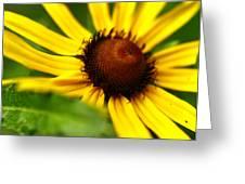 Yellow Beams Greeting Card by Alexandra  Rampolla