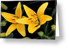 Yellow Beauties Greeting Card