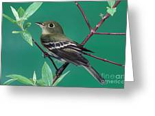 Yellow-bellied Flycatcher Greeting Card