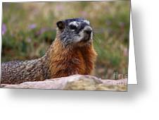 Yellow Bellied Marmot Greeting Card