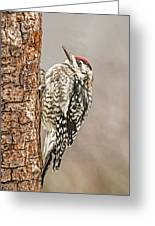 Yellow Bellied Sapsucker Greeting Card