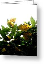 Yellow Bells Greeting Card