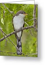 Yellow-billed Cuckoo Greeting Card