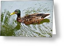 Yellow Billed Duck Greeting Card