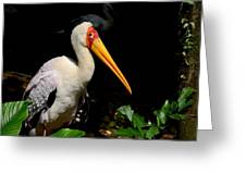 Yellow Billed Stork Peers At Camera Greeting Card