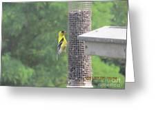Yellow Bird Feeding Greeting Card