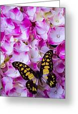 Yellow Black Butterfly On Hydrangea Greeting Card