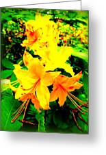 Yellow Bliss Greeting Card
