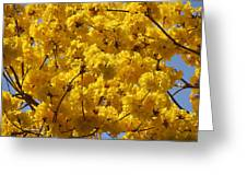 Yellow Blossoms Of A Tabebuia Tree Greeting Card