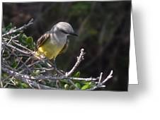Yellow Breasted Kingbird Greeting Card
