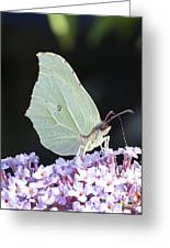 Yellow Brimstone Greeting Card