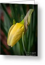 Yellow Bud Greeting Card