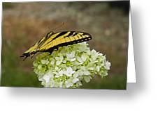 Yellow Butterfly 2 Greeting Card