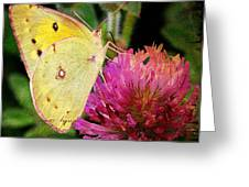 Yellow Butterfly On Pink Clover Greeting Card