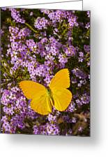 Yellow Butterfly On Pink Flowers Greeting Card
