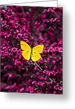 Yellow Butterfly On Red Flowering Bush Greeting Card
