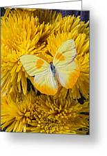 Yellow Butterfly On Yellow Mums Greeting Card