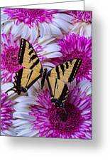 Yellow Butterfly Resting Greeting Card